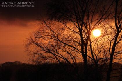 Birke_im_Sonnenuntergang