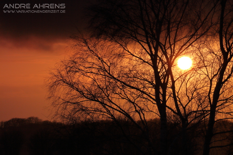 Birke im Sonnenuntergang